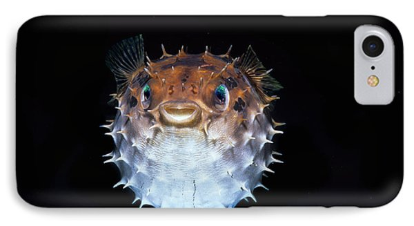 Short-spined Porcupinefish IPhone Case