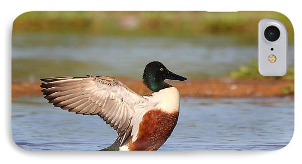 IPhone Case featuring the photograph Shoveler Flap by Ruth Jolly