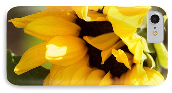 IPhone Case featuring the photograph Shy Sunflower by Cathy Donohoue
