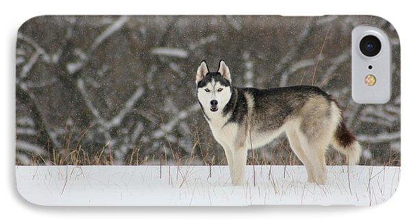 Siberian Husky 20 Phone Case by David Dunham