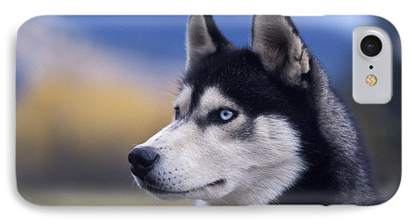 Siberian Husky Dog IPhone Case by Rolf Kopfle