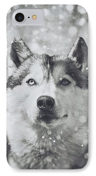 Siberian Husky In The Snow IPhone Case