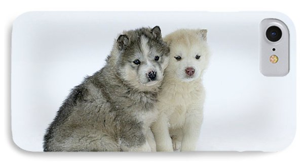 Siberian Husky Puppies IPhone Case by M. Watson