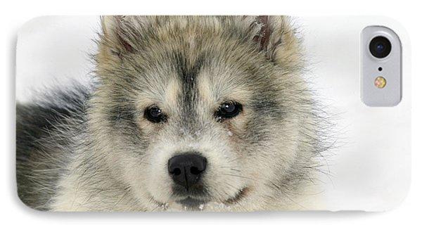 Siberian Husky Puppy IPhone Case by M. Watson