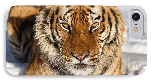 Siberian Tiger Face To Face Phone Case by Jerry Fornarotto