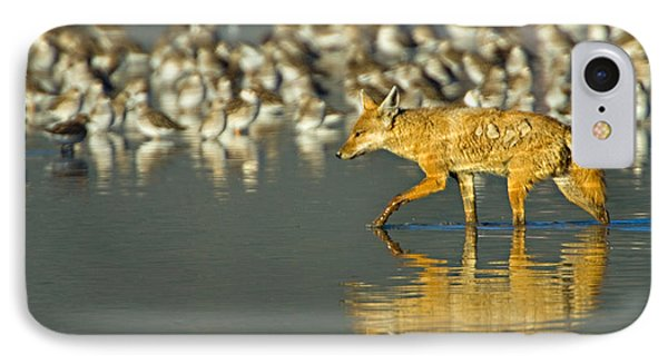 Side Profile Of A Golden Jackal Wading IPhone Case by Panoramic Images