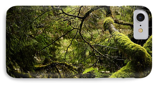 IPhone Case featuring the photograph Silence In The Green Forest by Lisa Knechtel