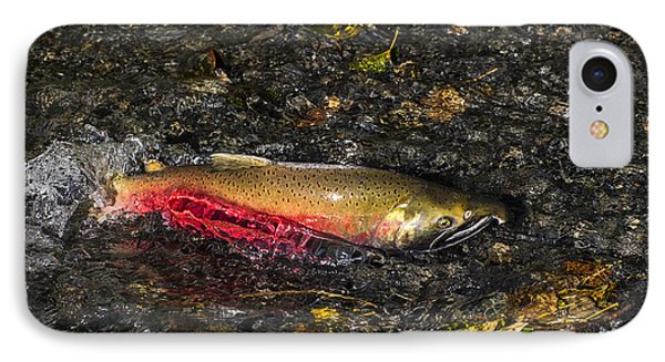 Silver Salmon Spawning IPhone Case by Doug Lloyd