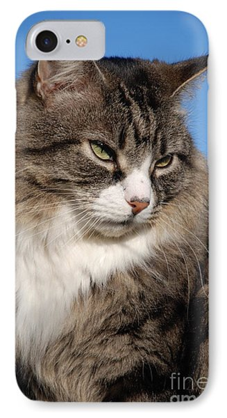 Silver Tabby Cat IPhone Case