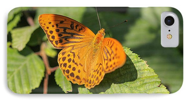 IPhone Case featuring the photograph Silver-washed Fritillary  - Male - Argynnis Paphia by Jivko Nakev