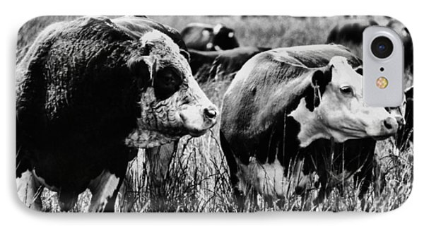 Simmental Bull 2 IPhone Case by Larry Campbell