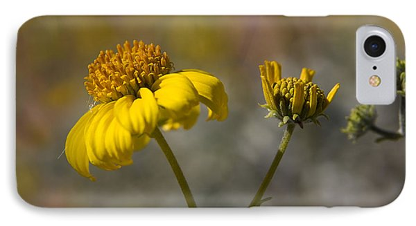 Simply A Daisy IPhone Case by Sue Cullumber
