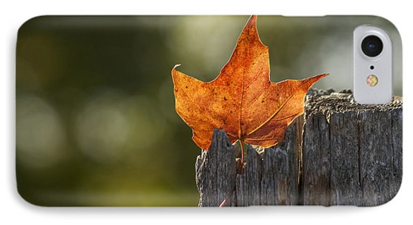Simply Autumn IPhone Case by Penny Meyers