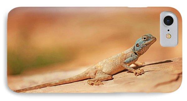 Sinai Agama (pseudotrapelus Sinaitus) IPhone Case
