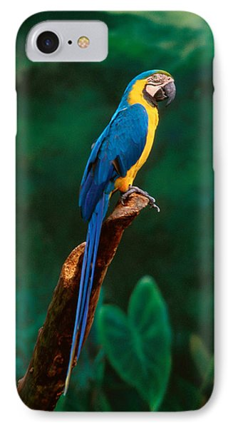 Singapore Macaw At Jurong Bird Park  IPhone Case by Anonymous