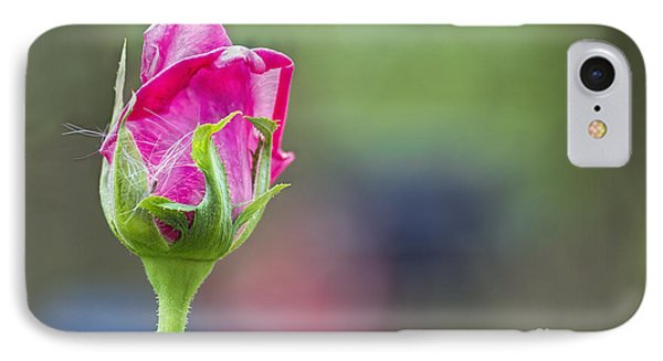 Single Pink Rose Bud IPhone Case