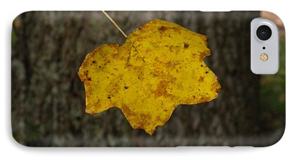 IPhone Case featuring the photograph Single Poplar Leaf by Nick Kirby