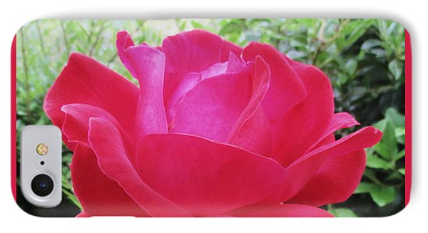 Single Red Rose IPhone Case by Kathy Spall