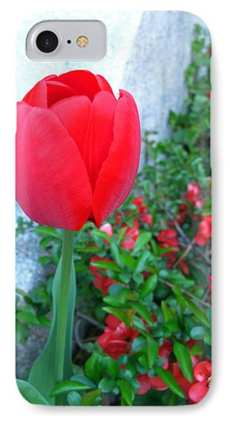 Single Red Tulip Phone Case by Barbara McDevitt