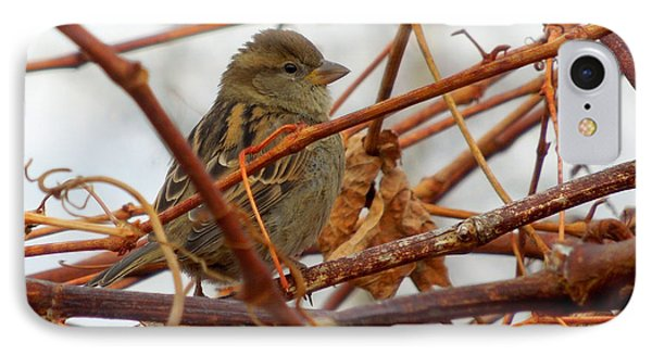 Single Sparrow Standing IPhone Case by Heidi Manly