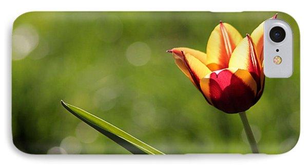Single Tulip IPhone Case