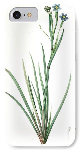 Sisyrinchium Bermudiana, Sisrinche Bermudienne, Blue-eyed IPhone Case