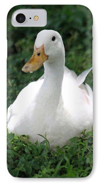 Sitting Duck IPhone Case by Pamela Walton