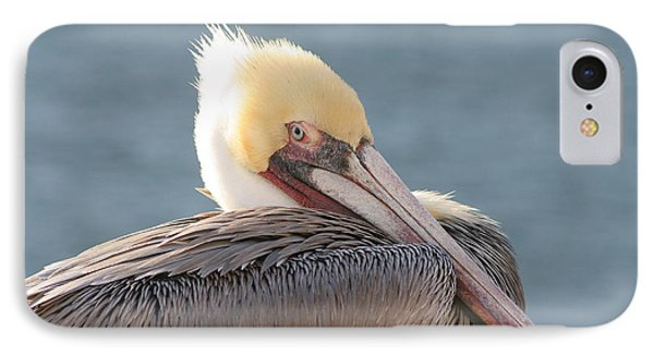 Sitting Pretty Pelican Phone Case by Bob and Jan Shriner