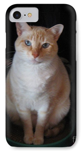 IPhone Case featuring the photograph Sitting Pretty by Wendy Coulson