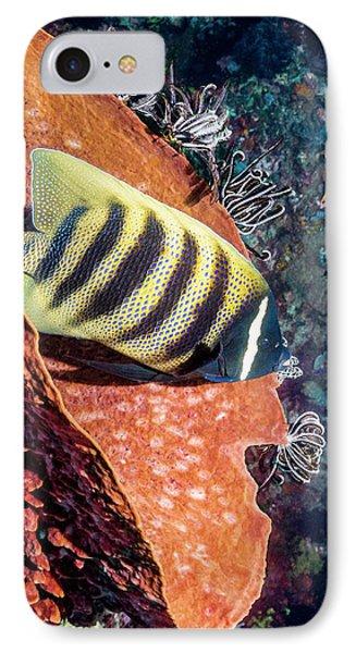 Sixbar Angelfish On A Reef IPhone Case by Georgette Douwma