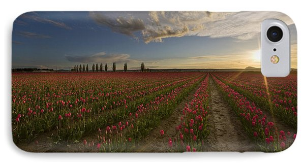Skagit Tulip Fields Sunset IPhone Case by Mike Reid