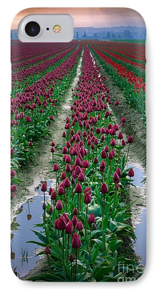 Skagit Valley Tulips IPhone Case by Inge Johnsson