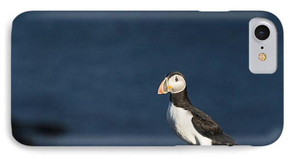 Skokholm Puffin IPhone Case by Anne Gilbert