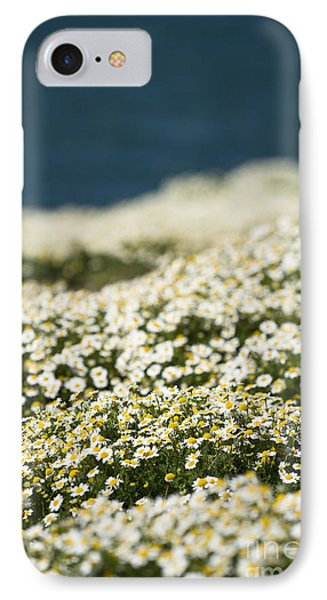 Skokholm Sea Mayweed IPhone Case by Anne Gilbert