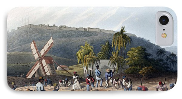 Slaves Planting Sugar Cane, 19th Century IPhone Case by British Library