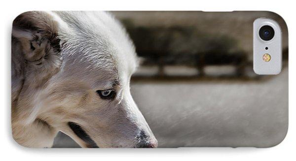 Sled Dog IPhone Case by Bob Orsillo