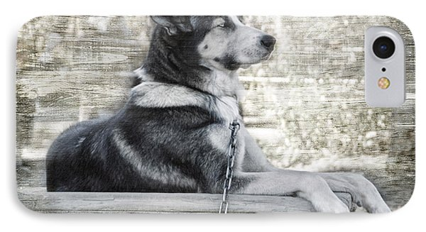 IPhone Case featuring the photograph Tuya - Sled Dog Of Denali by Dyle   Warren