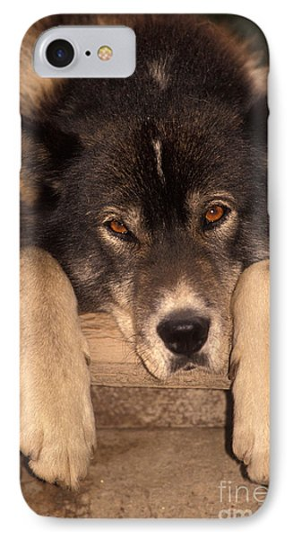 Sled Dog IPhone Case by Ron Sanford