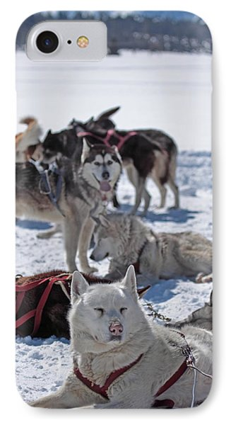 IPhone Case featuring the photograph Sled Dogs by Duncan Selby