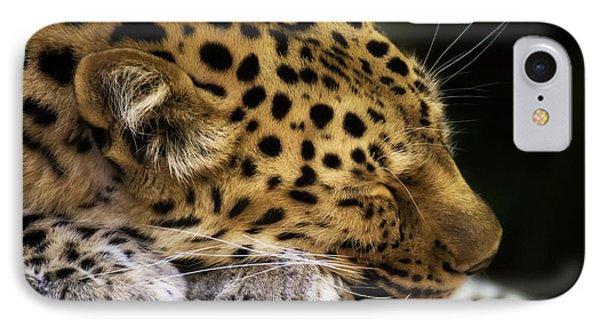 Sleeping Amur Leopard IPhone Case by Fiona Messenger
