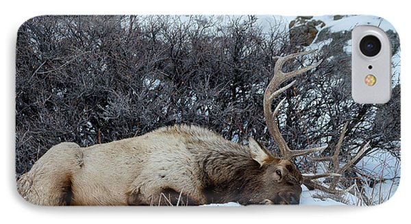 Sleeping Elk IPhone Case