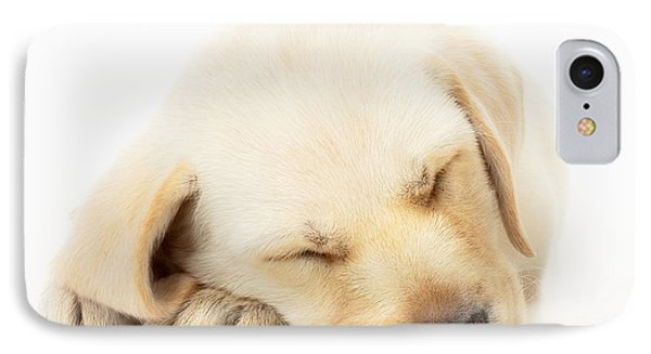 Sleeping Labrador Puppy IPhone Case