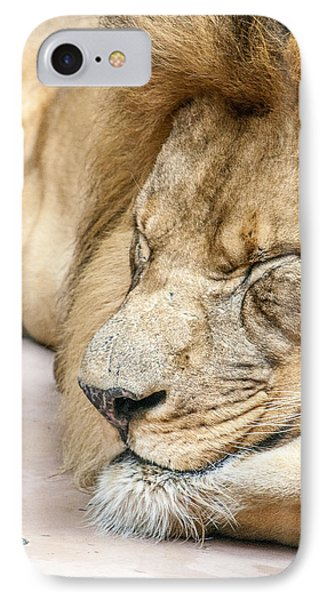 Sleeping Lion IPhone Case by Dawn Romine