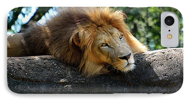 IPhone Case featuring the photograph Thinking Lion by Lisa L Silva