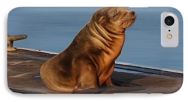 Sleeping Wild Sea Lion Pup  IPhone Case by Christy Pooschke