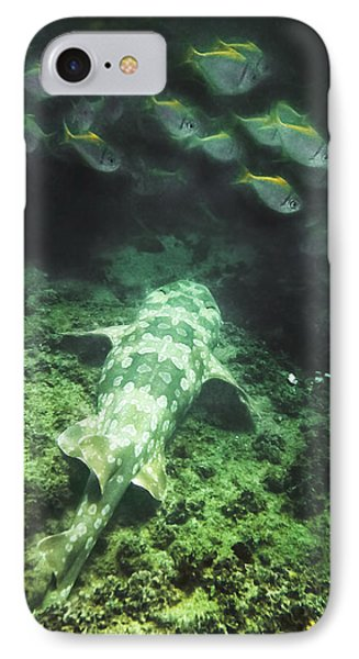 IPhone 7 Case featuring the photograph Sleeping Wobbegong And School Of Fish by Miroslava Jurcik