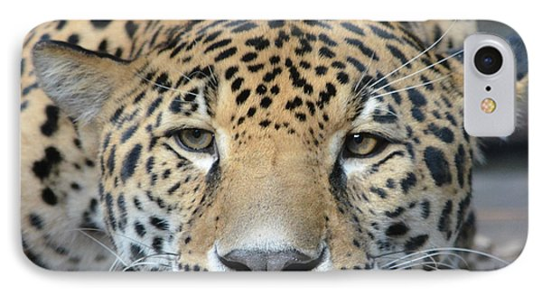 Sleepy Jaguar IPhone Case by Richard Bryce and Family
