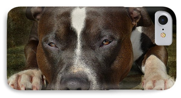 Sleepy Pit Bull IPhone Case by Larry Marshall