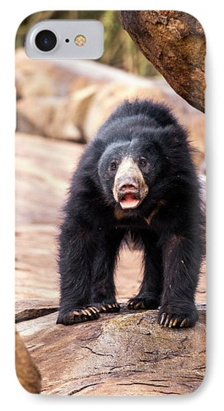 Sloth Bear IPhone Case by Paul Williams