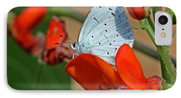 Small Blue Butterfly IPhone Case by Tony Murtagh